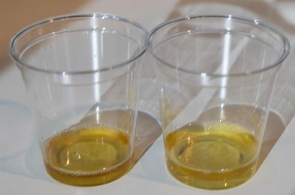 キリンビール横浜工場見学麦汁試飲体験